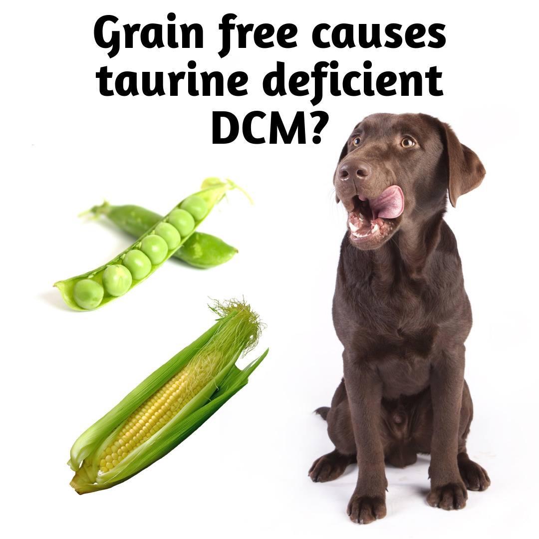 dieta senza cereali o legumi